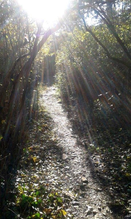 Bäume und Licht